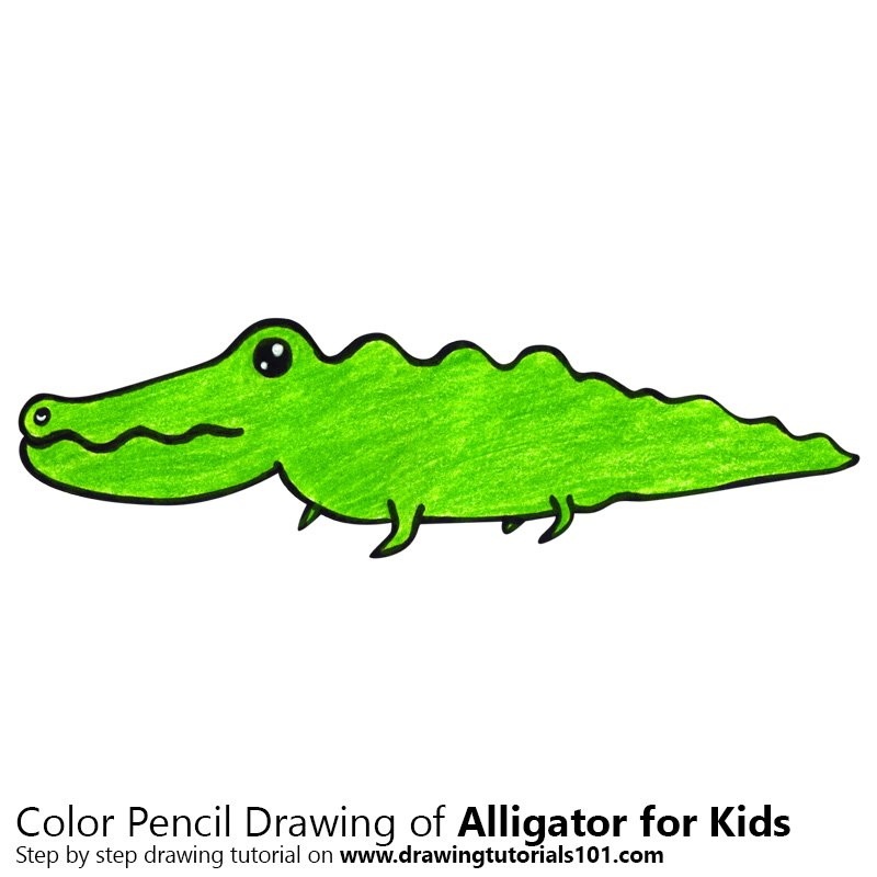 800x800 Learn How to Draw an Alligator for Kids (Animals for Kids) Step by