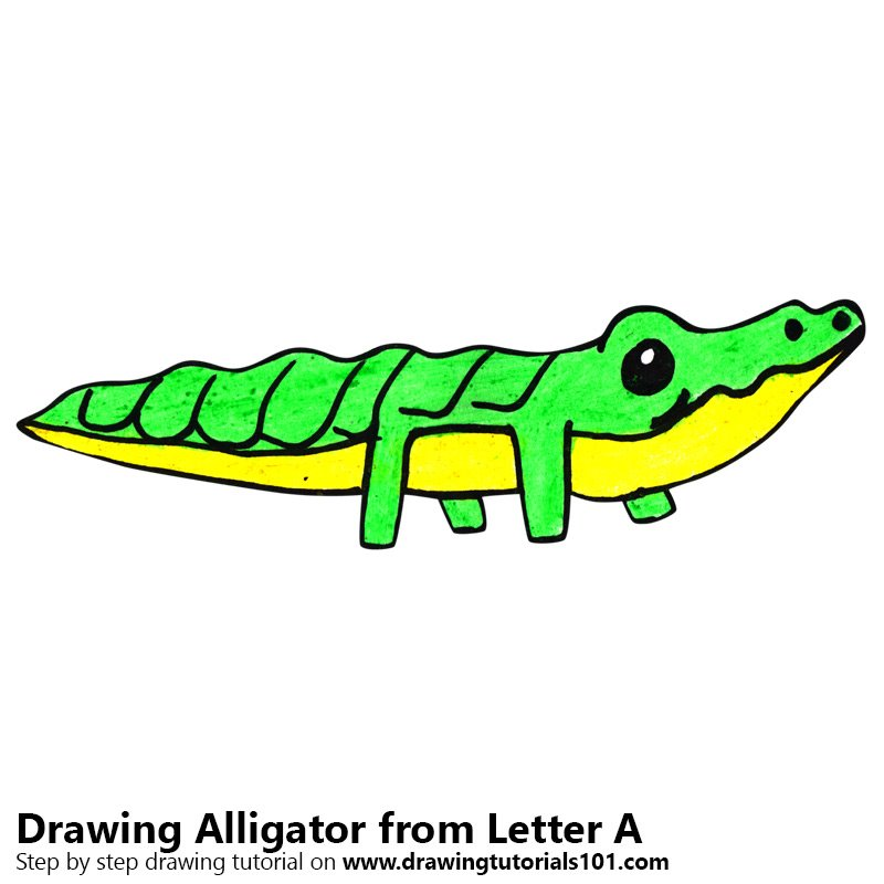 800x800 Learn How to Draw an Alligator from Letter A (Animals with Letters