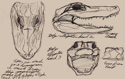 500x316 Baby Alligator head studies This is why I do not understan… Flickr