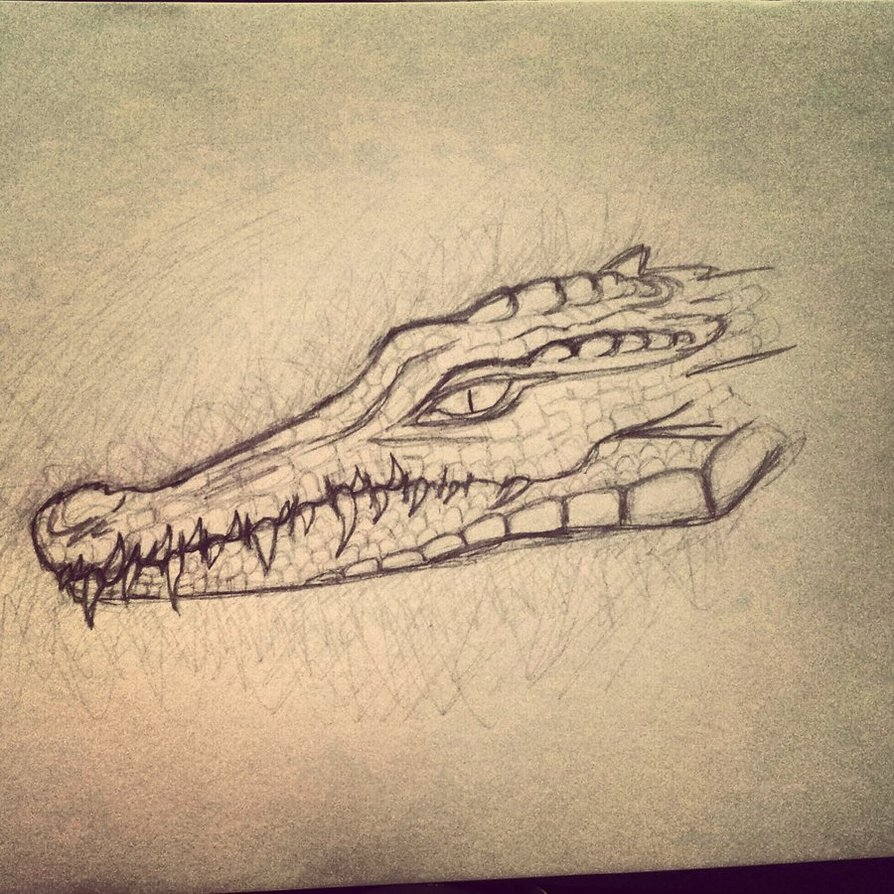 894x894 Crocodile Head By Katiee E