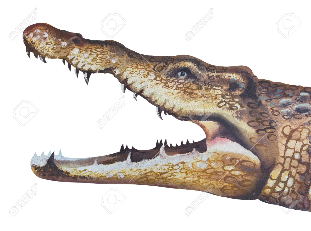1300x967 Isolates Of Drawing Crocodile Stock Photo, Picture And Royalty