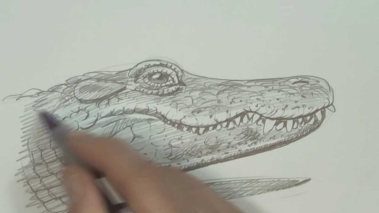1280x720 Speed Video, Alligator Drawing