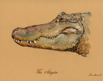 340x270 alligator head art – Etsy Art Pinterest Alligators, Drawings