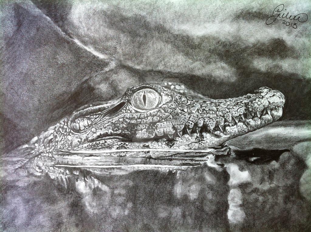 1024x765 Baby Crocodile'