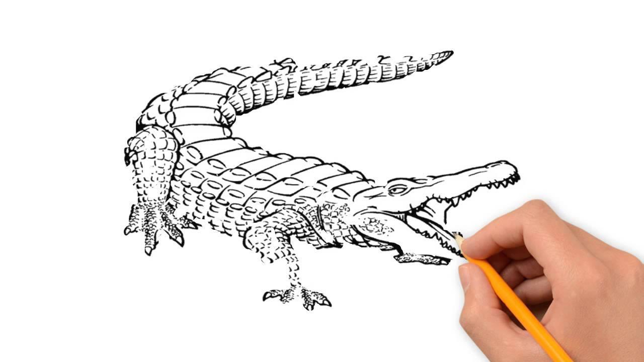 1280x720 Crocodile Animals Pencil To Draw Step By Step