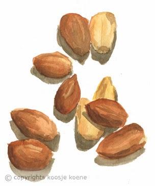 304x366 Watercolour Almonds