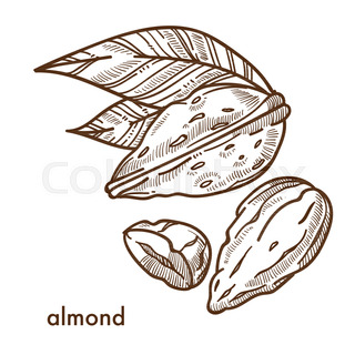 320x320 Whole And Cut Almond Nuts, Vector Illustration Isolated On White
