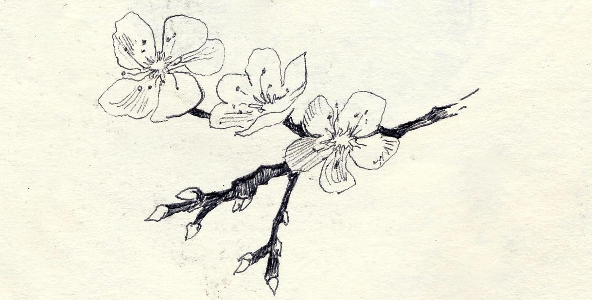1218x618 Almond Flower Aquariel