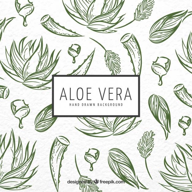 626x626 Aloe Vera Sketch Background Vector Free Download