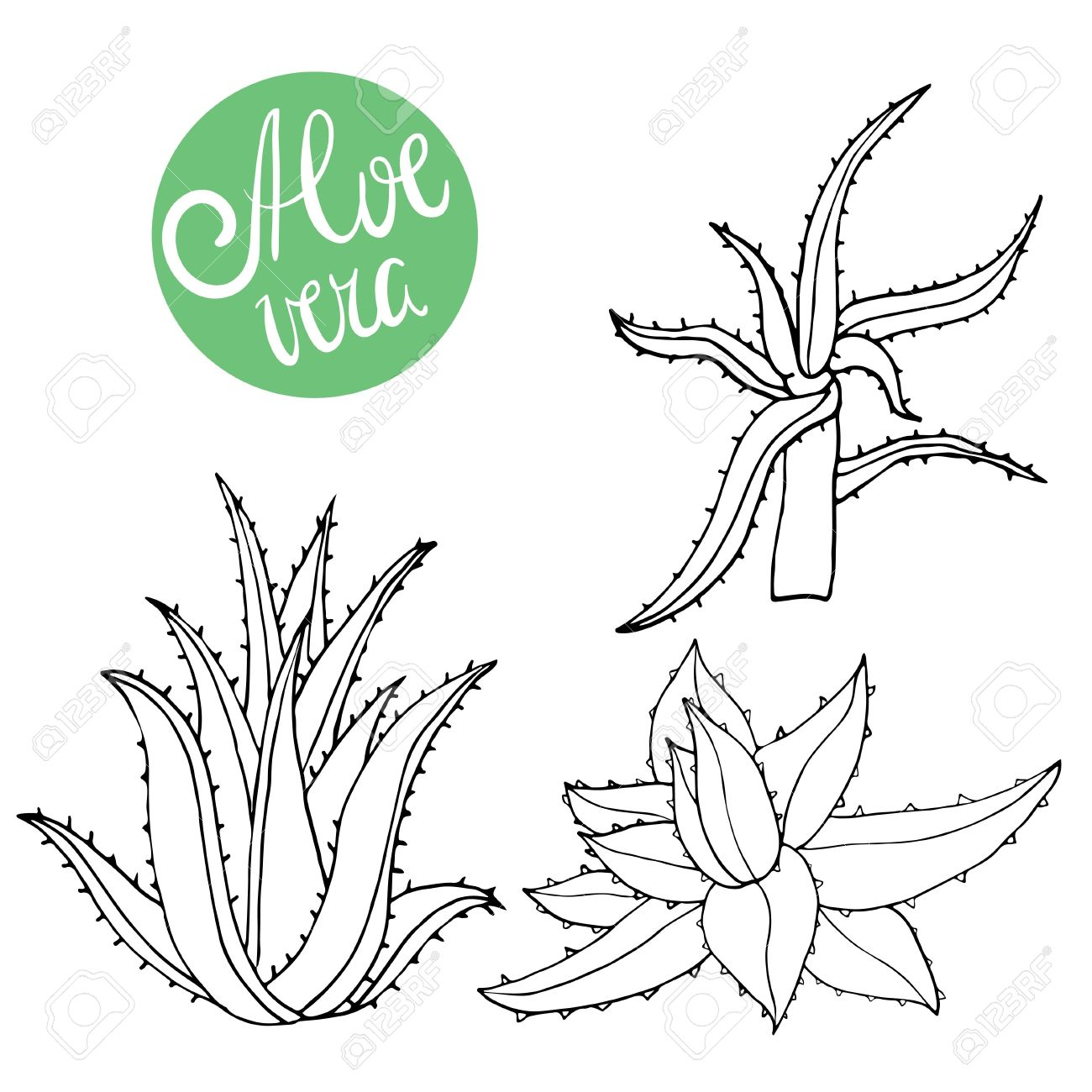 1300x1300 Collection Of Hand Drawing Aloe Isolated On White. Vector Doodle