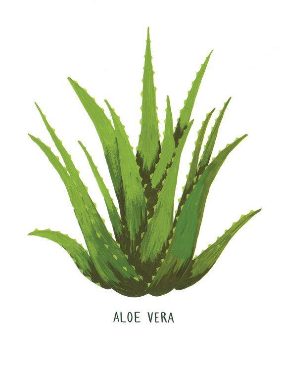 570x738 Organic Aloe Vera