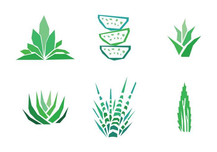 700x490 Set Of Aloe Vera Drawings