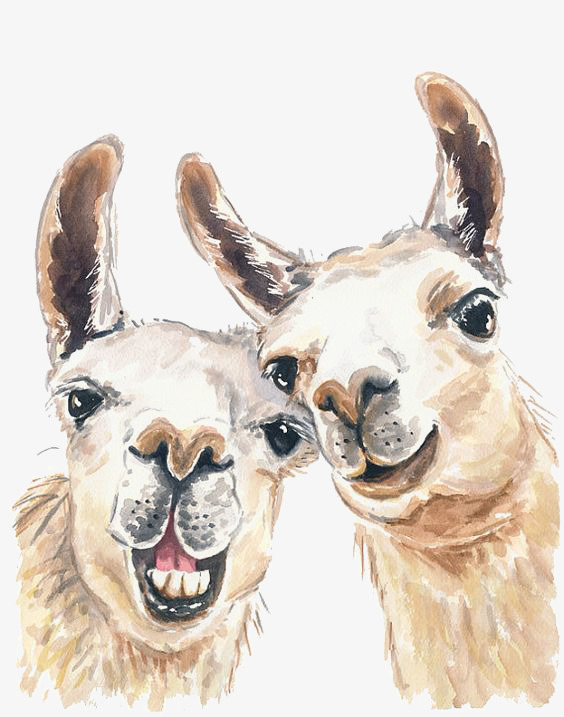 564x717 Drawing Alpaca, Animal, Mud Horse, Yellow Png Image And Clipart