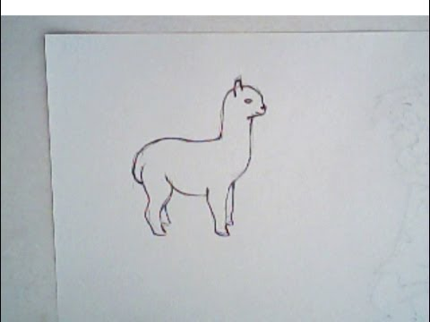 480x360 How To Draw An Alpaca (Simple Drawing)