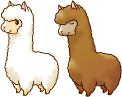 240x191 Paca Babies! Cute Alpacas And Card Ideas