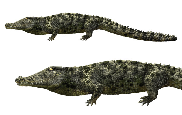 crocodile drawing images