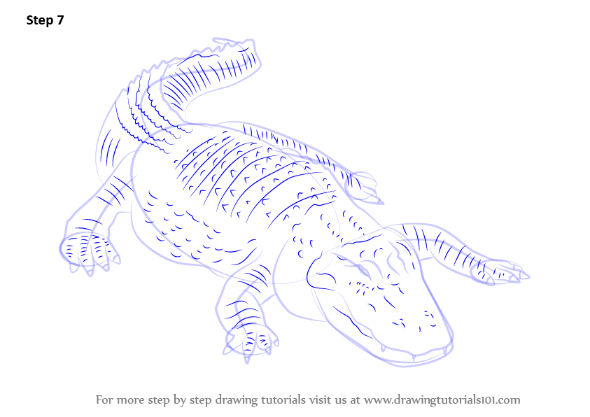 843x596 Learn How To Draw An American Alligator (Reptiles) Step By Step