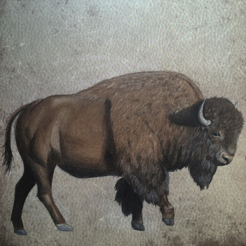 500x500 American Bison Buffalo Colored Pencil Drawing Print