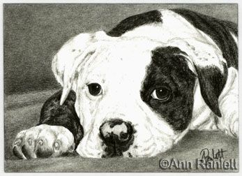 347x252 13 Best Bulldogs Images On Dog Art, Dogs And Pets