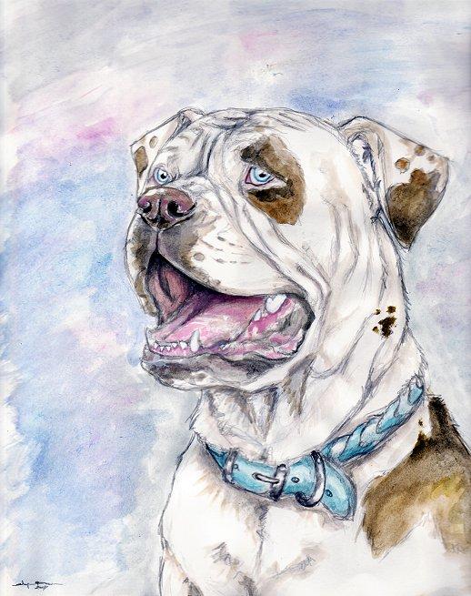 518x655 American Bulldog Colors Of K9s By Ebonytigress