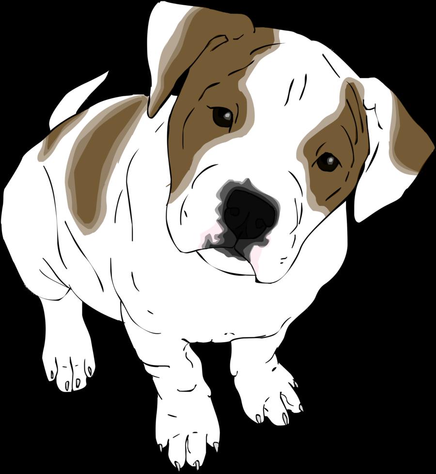 900x978 American Bulldog Pup By Tha Baist