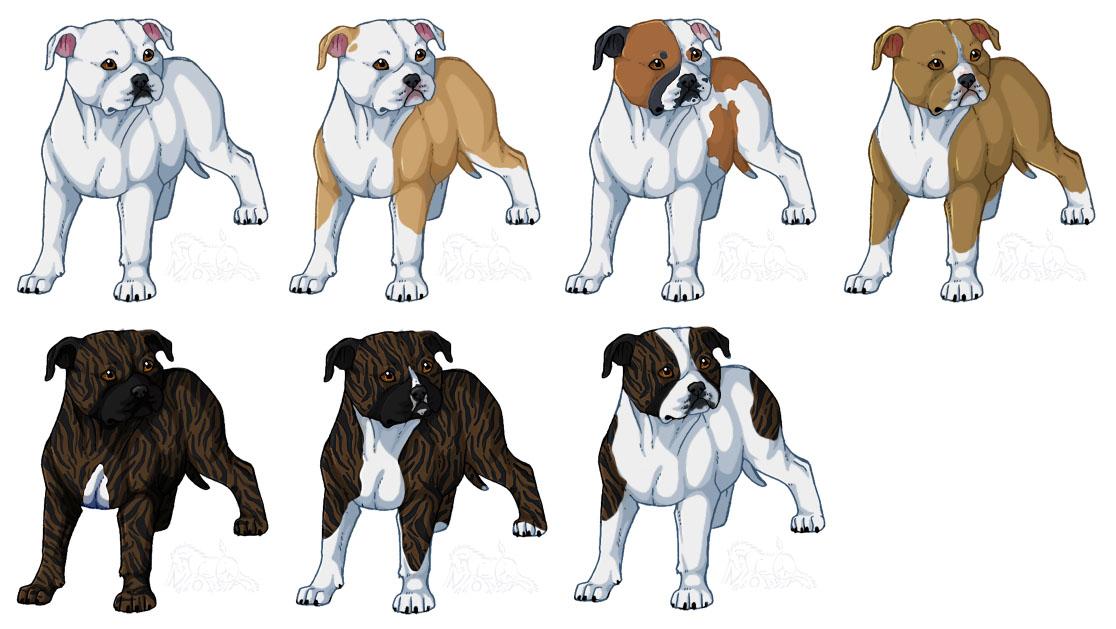 1116x629 American Bulldogs, Bully Type By Novablue