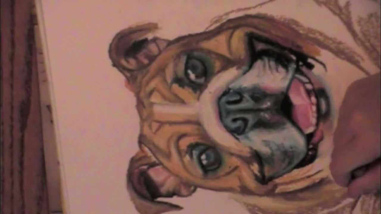 1280x720 Drawing An American Bulldog