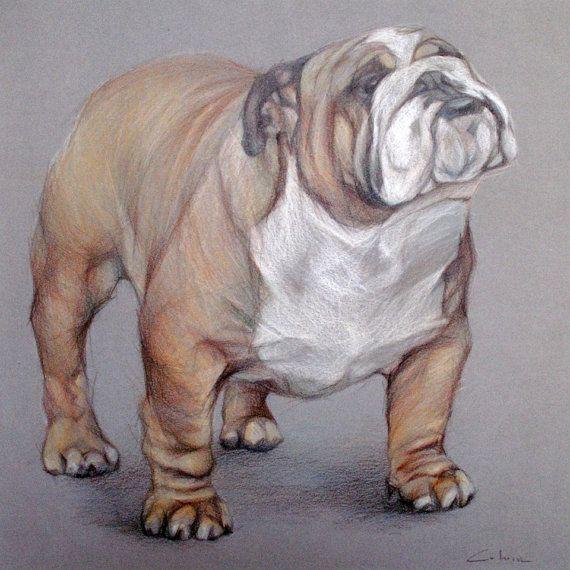 570x570 English Bulldog Art Pet Portrait Drawing American Bulldogs