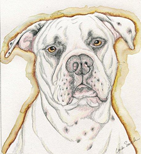459x500 Limited Edition Print American Bulldog Pet Dog Art Carla Https