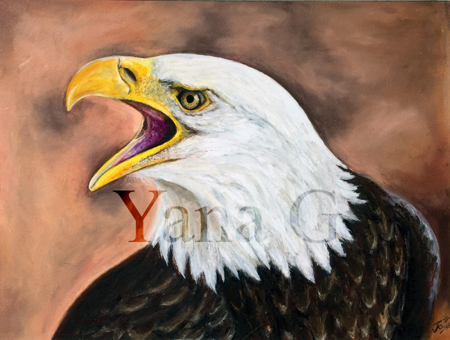 1500x1131 Bald Eagle Paintingdrawing. Original Oil Pastel Painting.