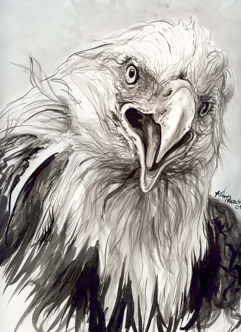800x1103 Pencil Drawings Of Eagles Eagle Eye Drawing
