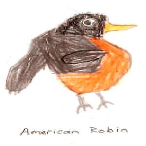 300x300 Robin Drawing Robin Redbreast Robin Redbreast
