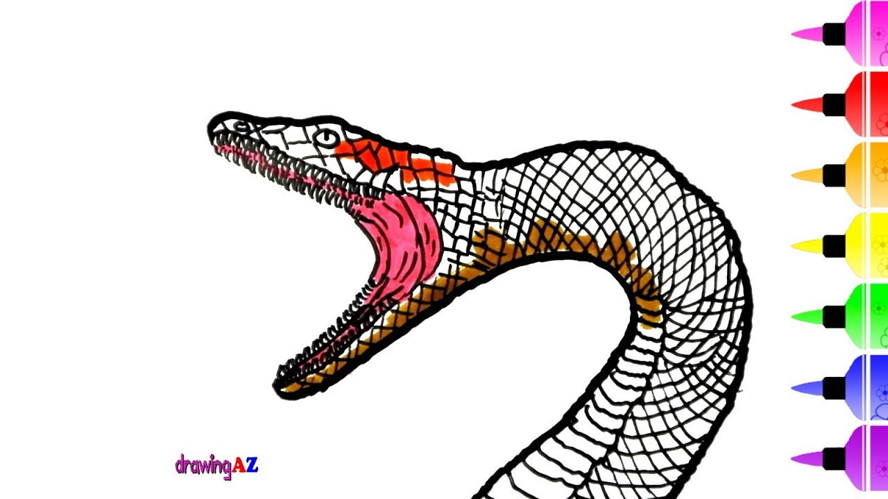 1280x720 Anaconda Drawing And Coloring Pages For Kids