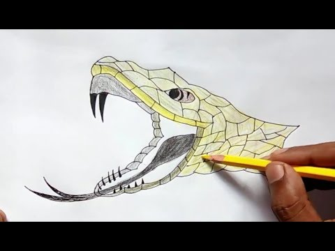 480x360 Anaconda Snake Head Drawing (Amazing Drawing)