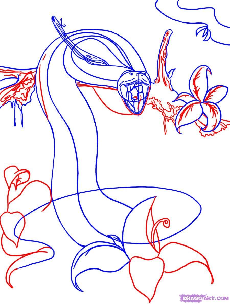 900x1190 How To Draw An Anaconda Snake Step 4 Art Anaconda