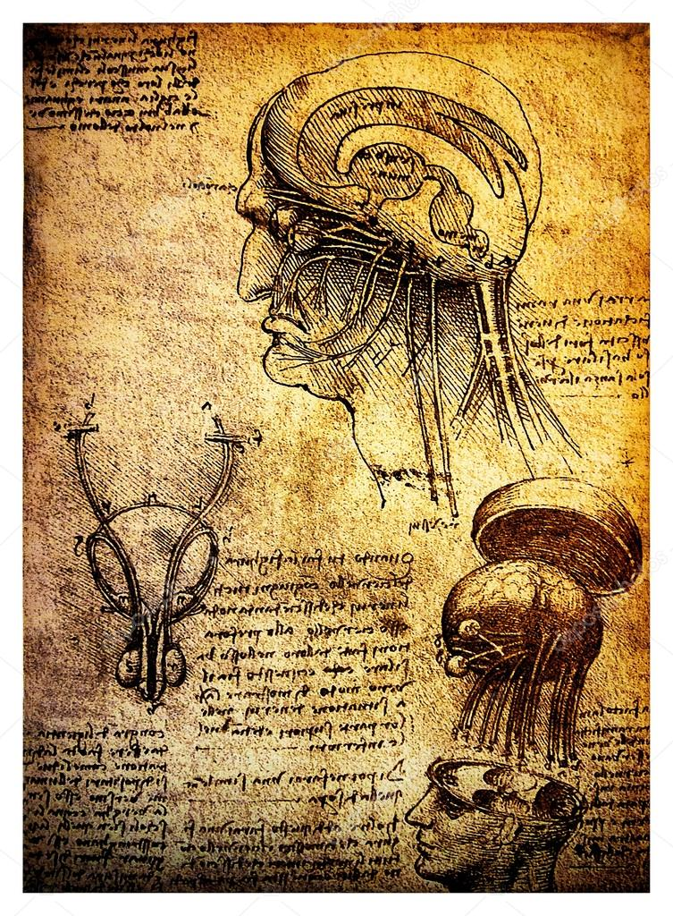 753x1024 Ancient Anatomical Drawings By Leonardo Davinci Stock Photo