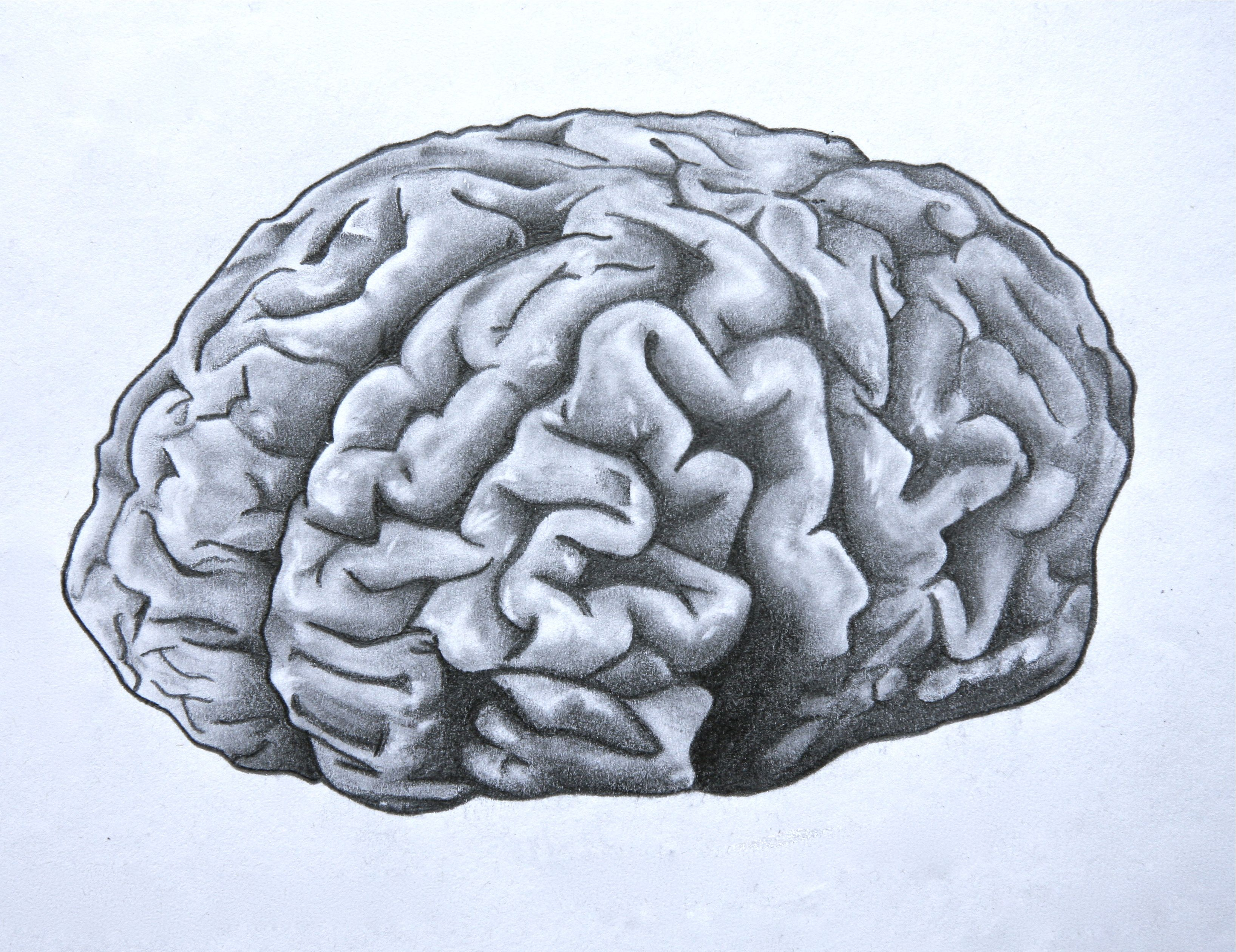 3272x2521 Brain. Anatomical Drawing In Pencil. Cd And Hbs Class