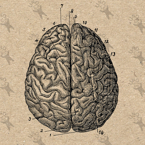 570x570 Vintage Image Anatomical Brain Retro Drawing Picture Instant