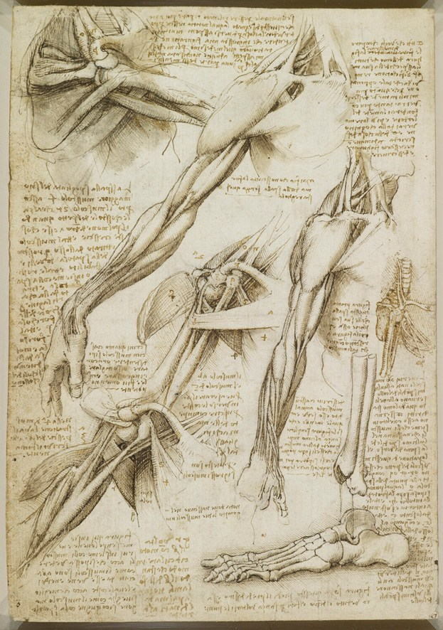 623x886 A Rare Glimpse Of Leonardo Da Vinci's Anatomical Drawings Brain