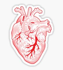 210x230 Anatomical Heart Drawing Stickers Redbubble