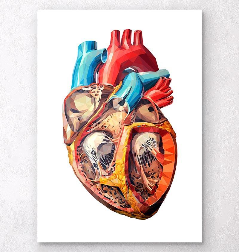 800x842 Anatomical Heart Drawing