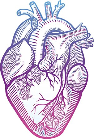 304x450 Pretty Pastel Ombre Anatomical Heart Drawing Vinyl Decal Sticker