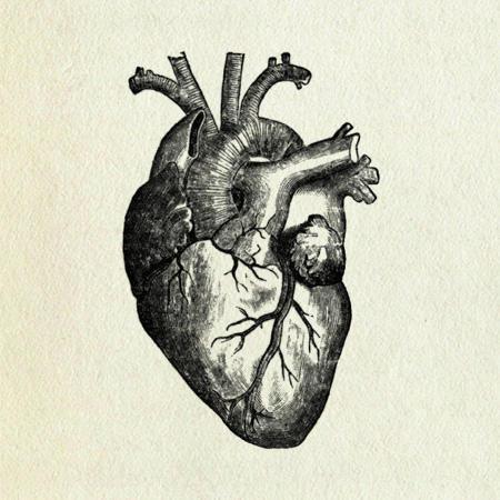 450x450 Human Heart Tattoo, Tattoo And Tatoos