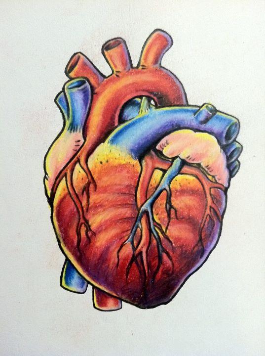 537x720 More Like Anatomical Heart Tattoo By ~tricomiart