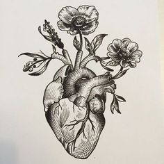 236x236 Vintage Anatomical Heart Drawing