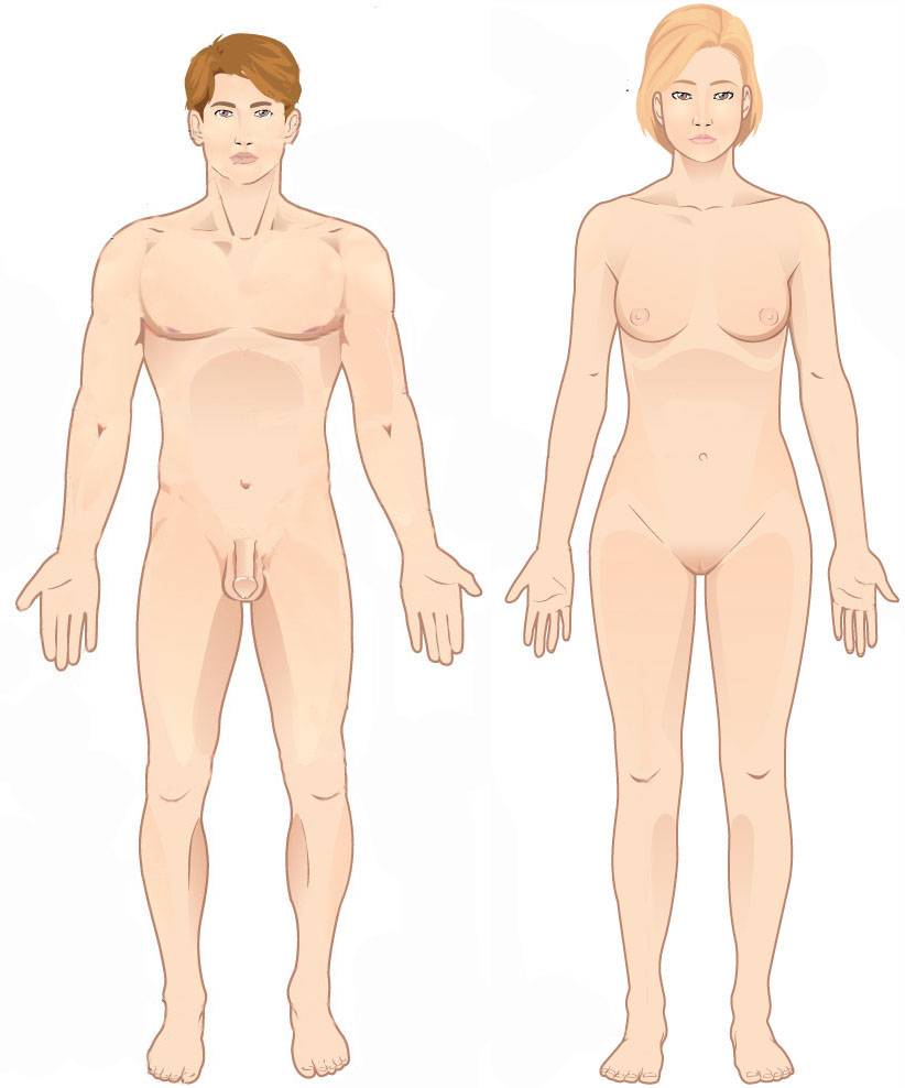 822x988 Fileanatomical Position.jpg