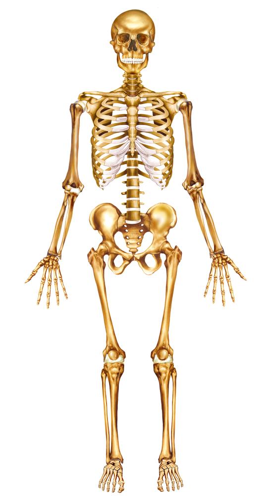 539x1000 Orientation In Anatomy