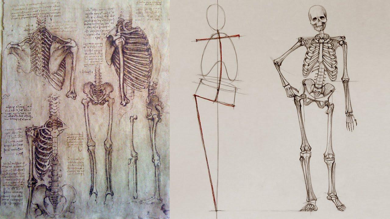 1280x720 Human Body Skeleton