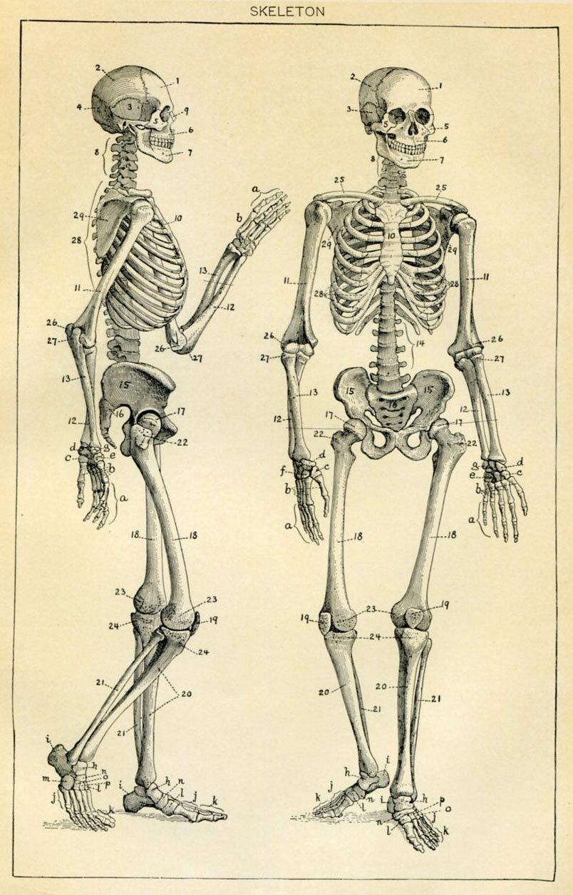 804x1254 Skeleton Antique Book Plate