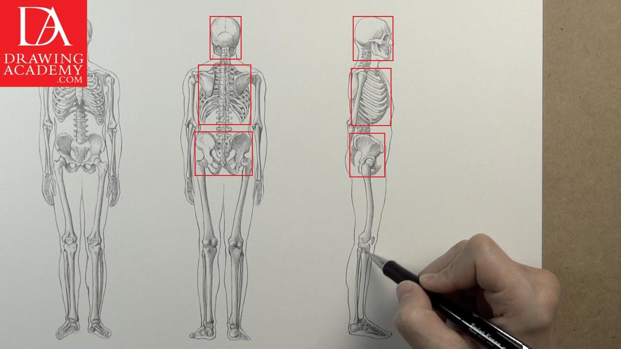 1280x720 Skeleton Bones